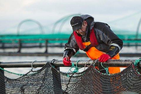 En arbeidsgruppe i Senterpartiet ønsker å ta fiskeoppdretten på land. (Illustrasjonsfoto: Terje Bendiksby, NTB scanpix/ANB)