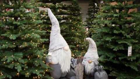 Nesten like mange velger et juletre i plast som et godt, gammeldags tre fra skogen.