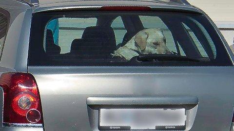 ILLUSTRASJONSBILDE: Politiet sier at de knuser ruter hvis de ser en hund som sliter i en varm bil.