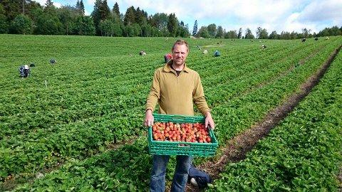 JORDBÆRBONDE: Dagfinn Mysen jobber på spreng for å redde årets jordbærsesong. Arkivfoto.