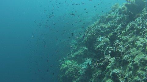 SJELDEN FISK: Indonesias undervannsliv er representert av et enestående biologisk mangfold. Blant annet representert ved den sjeldne mandarinfisken.
