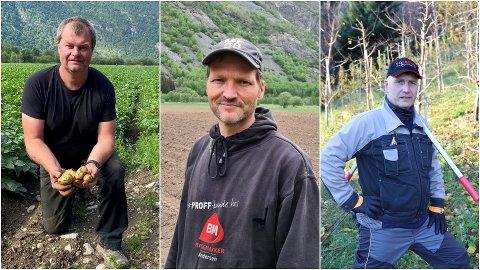 I RUTE: Det meste av frukt, bær og grønsaker er relativt greitt i rute, fortel  grøntbøndene Per Hjermann (f.v.), Anders Voll Eltun og Terje Fosshagen.