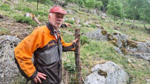 STOR JOBB: Ivar Molde har med god hjelp fått rydda heile området her, som var reine jungelen, til å bli ei beitemark sauene trivst godt på.
