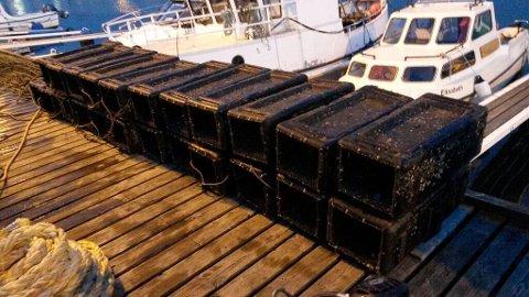 I Hafrsfjord ligger det mange teiner og fanger fisk og skalldyr uten at de blir hentet opp. Det er et stort problem.
