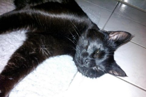 Katten var så hardt skadd at den måtte avlives av dyrevelferdsmessige grunner.