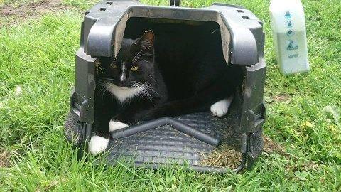 MISHANDLET: Den fire og et halvt år gamle katten Mute ble trolig mishandlet av en eller flere personer, natt til søndag. Nå utlyses en dusør for å få gjerningspersonen identifisert. foto: privat