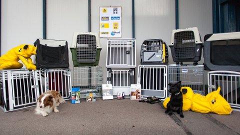 Ikke alt utstyret som ble testet, er like godt egnet til å sikre hunder i bil.