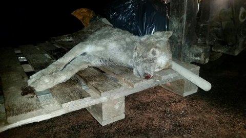 FUNNET NEDGRAVD: Hunden Bentley ble funnet nedgravd på 55-åringens eiendom av noen av personene som leitet etter den savnede hunden. Foto: Privat