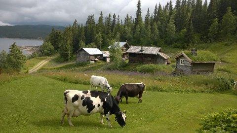 INTERESSANT: Viken i Bondal er fortsatt aktuell som Farmen-gård - men ikke til årets sesong.