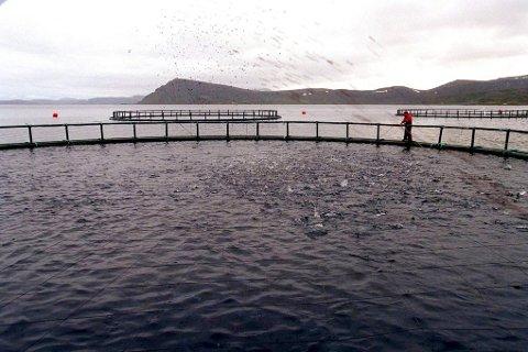 En oppdretter med to lokaliteter på Smøla ønsker å rømme fra det oppdrettstette området til Romsdal på grunn av frykt for at laksen skal bli smittet av den fryktede pankreassjuken. Illustrasjonsfoto: ANB
