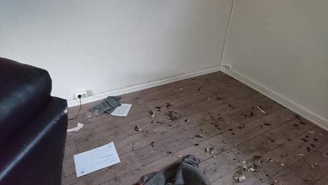 Slik så det ut i kjellerleiligheten etter at tre hunder ble etterlatt der alene. Opprydningsarbeidet kostet 25.000 kroner.