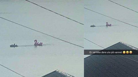 AVSLØRT: Mens Pernille Storli ante ingen fare hjemme på Kaldnes, tok tyvene med seg flamingo hennes ut på fjorden. Tyvene ble avslørt av Pernilles venner.