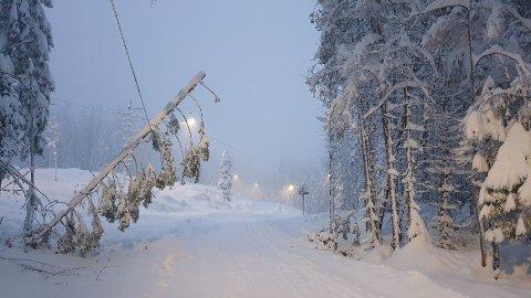 Flere trær har knekt og er på vei til å falle. Derfor kommer Skiforeningen nå med en advarsel. Foto: Jørn Grøstad (Skiforeningen)