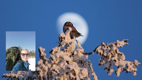 UGLA: Bildet til Nygård bærer navnet «Haukugle og månen» og ble tatt i februar i år, dette bildet tok hun 2.plass i konkurransen med.
