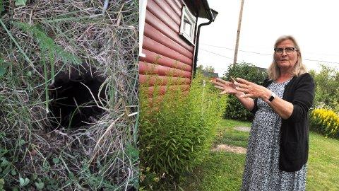 FRYKTER: Evy Haugen frykter at jordrotter har bosatt seg i kjelleren sin på Kolbu.