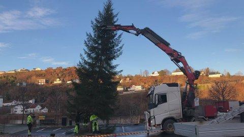 Juletreet er på plass på Knud Knudsens plass.