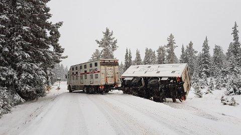 Uheldig: Føreren av dette vogntoget måtte vike for et motgående vogntog, og ble derfor nødt legge seg langt ut på vegkanten. Det førte til at hengeren skled av vegen, forteller et vitne.