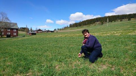 Tidlig sommer: Magnhild Strand studerer graset etter en kald mai i år. Foto; arkiv)