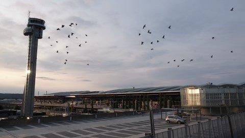Rundt 15.000 personer har vanligvis sin arbeidsplass på Oslo lufthavn Gardermoen. Nå går mange av dem permittert.