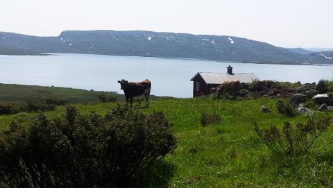 Jotunheimvegen går gjennom åpne og vennlige fjellområder med utsikt mot høye fjell og store vann, skriver vegselskapet på sin nettside.