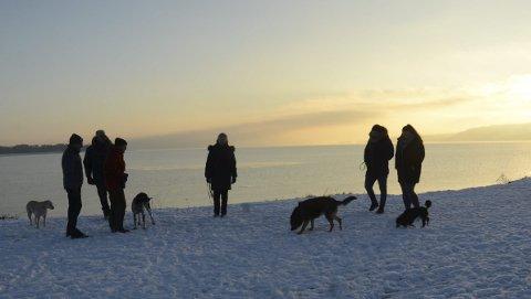 Samlingssted: Det er hyggelig stemning både blant hunder og eiere i den nye parken.