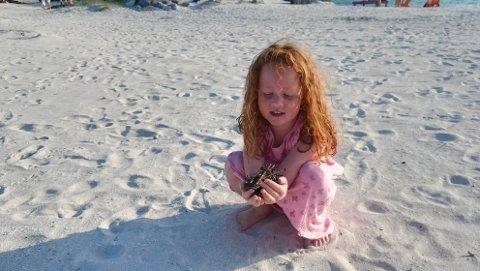 Kamilla Risvold Brovold var sjokkert over kor mange spikrar ho fann.