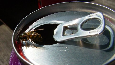 Veps er viktig, men kan være irriterende rundt middagsbordet. Spray og skum tar knekken på hissigproppene. Foto: Krefting/ANB