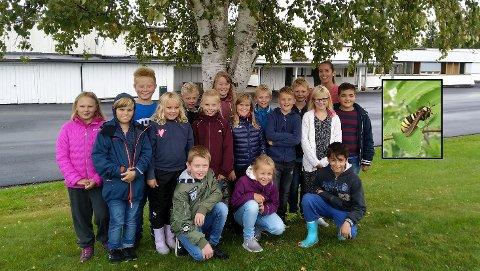 LURER: 4.trinn ved Vilberg skole lurer på om det er flere som har sett ospeglassvinge i det senere?