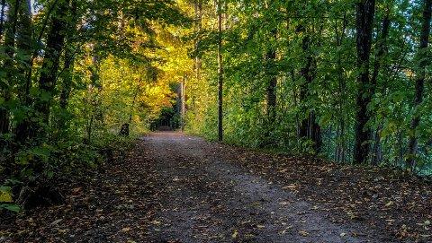 FINT: Høstferien byr på vakre farger og fint utevær.