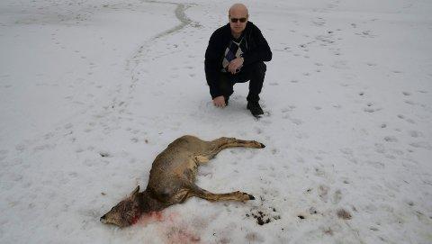 MYE SPOR:  Det er mye spor i området der rådyret ble bitt ihjel. – Merkelig det ikke er spist av hvis det er rovdyr som har gjort det, sier Ole Petter Eriksen Benterud.