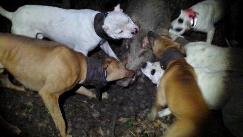 OMFATTENDE MATERIALE: Egenproduserte filmer og bilder av angrepene var viktige bevis i saken mot de seks personene dømt for dyremishandling.