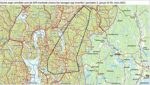 Dataene fra senderne som er montert tilsier at ulveparet har vært innenfor det stiplede arealet i de ni kommunene, som også innbefatter deler av Aurskog-Høland. Illustrasjon: MIljødirektoratet
