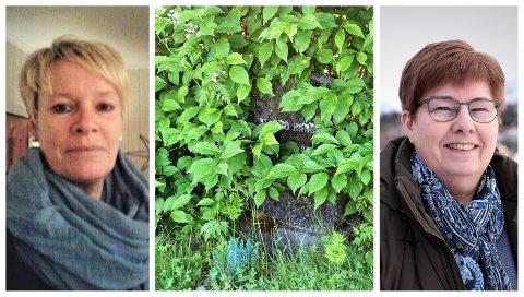 Siv Merethe Andreassen (t.v.) fortviler over tilstanden på kirkegården. Kirkeverge i Alstahaug, Tove Hansen, beklager at vedlikeholdet på Villmoen kirkegård i Leirfjord ikke er på topp.