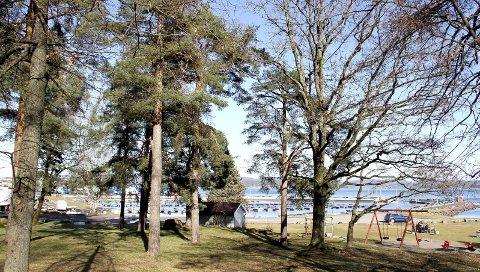 VERDI: Trærne her i Hagemann-parken skal beskyttes. Foto: Lars Ivar Hordnes