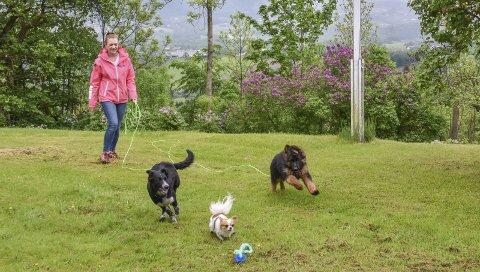 Mye lek: De store grøntarealene på Svere Gård innbyr til lek og aktivitet. – Jeg gleder meg til å komme i gang med hundebarnehagen, sier Ingrid Loe Svere, her med (fra venstre) Lotta, Quattro og Nova. Hun blir også å finne på Lierdagene, hvor barnehagen har egen stand.foto: Cecilie Johannessen