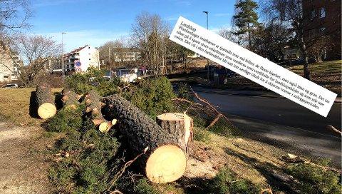 Tilrettelegging for sykkel i Langbølgen har vært planlagt i mange år. Her ligger trær som ble felt tidligere denne uken.