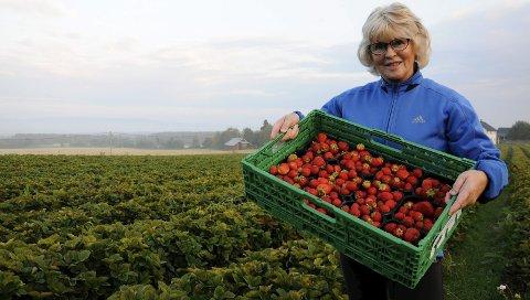 SENt: Med plukking av 390 kilo jordbær den 14. september, settes nå punktum for en god jordbærsesong for Sonni Sangnes og ektemannen Halfdan.Foto: Kristin Stavik Moshagen