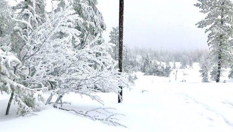 Tilbake: Gjør det klar for to-tre dager med snøvær før mildværet treffer vårt område til helga.