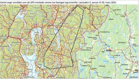 Kartutsnittet viser området ulvene har beveget seg i.