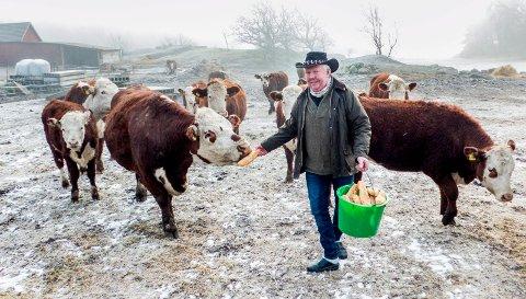 MÅTTE AVLIVE KU: Hvaler-bonde Tore Mads Holte har et nært forhold til kyrne sine. Lørdag ble han tvunget til å avlive en av dem, etter at hun hadde fått i seg en sylskarp metallbit.
