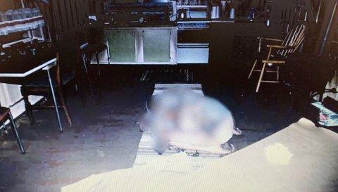 PÅ KJØKKENET: Ingvar Lindegård ble funnet på kjøkkenet i huset sitt i Vestre Gran. Politiet mener han har kommet seg fra sofaen og inn på kjøkkenet før han døde av kullosforgiftning. Han hadde skader på kroppen som politiet mener han ble påført før han døde.