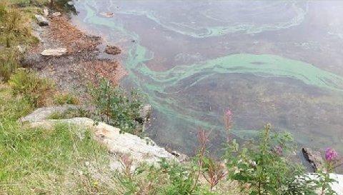 AKSDALSVATNET: Slik så det ut i Aksdalsvatnet i fjor. Nå er det igjen påvist blågrønnalger i vatnet.