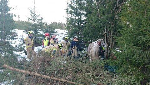Skadet: Hesten Emir ble skadet da den falt ned en skrent i Hvittingfoss i slutten av februar. Nå ber samboerparet om hjelp til å dekke operasjonen.