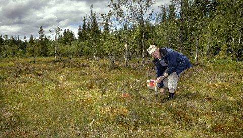 Ivrig bærsanker: – Det er en god bærhøst i år, sier Kåre Aandalen fra Gjøvik, som er ute så ofte han kan.  Foto: asbjørn risbakken