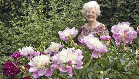I full blomst: Det er mange pioner i hagen til Inger Wik, og nå er de på sitt aller fineste.