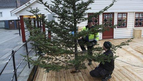 (Grøns)berga dagen: Thomas Krupi (t.v.) og Remi Grønstøl får opp juletreet på den nye plattingen utanfor Hjørnevikbua.