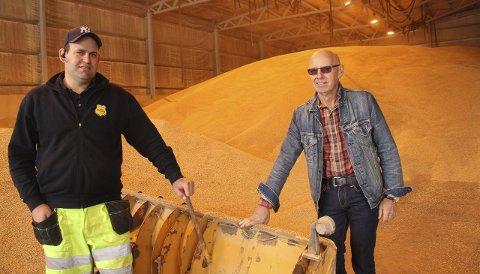KORNBERG: Marius Urdahl i Urdahl Maskin sørger for å skyve kornet opp i store hauger. Han og Arne Christian Johannessen er fornøyd med det store kornberget på Haslemoen.