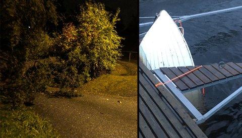 ROLIG TIL TROSS FOR UVÆR: Ekstremværet «Knud» herjet ikke så voldsomt i Halden som meteorologene først meldte. På Grantoppen i Øbergveien i Tistedal falt et tre som kommunen tok seg av. Ved bruovergangen til Sauøya sank en båt som havnevesenet.