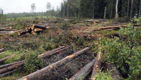 ELVERUM PÅ TOPP: Tall fra SSB viser at det er Trysil som har mest skog, men at Elverum topper hogststatistikken.