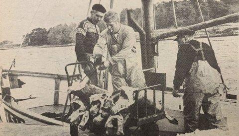 HÅBRANN: Innlevering av håbrann ved Langesundfisk. På bildet Albert og Helge Johansen fra Arøya og langesundsfiskeren Fredrik Nilsen.